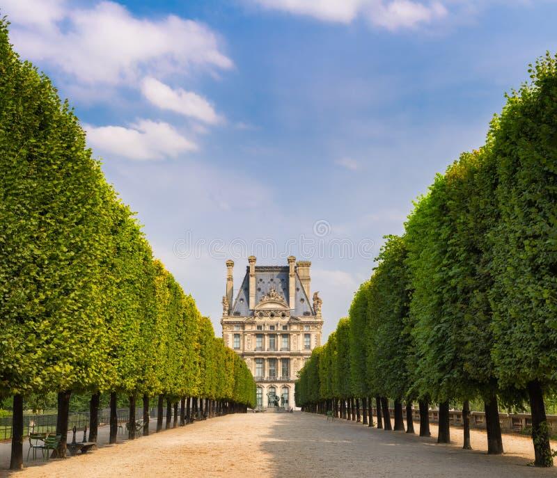 Den Tuilleries trädgården träd-fodrade utsikten som leder till Louvre museet, Paris, Frankrike royaltyfri foto