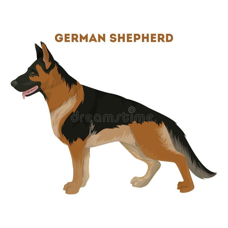 Den tyska herden förföljer royaltyfri illustrationer