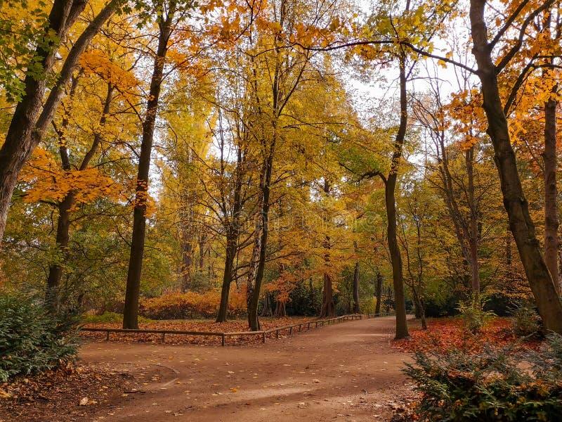 Den tysta guld- hösten parkerar utan folk i Berlin, Tyskland royaltyfri foto