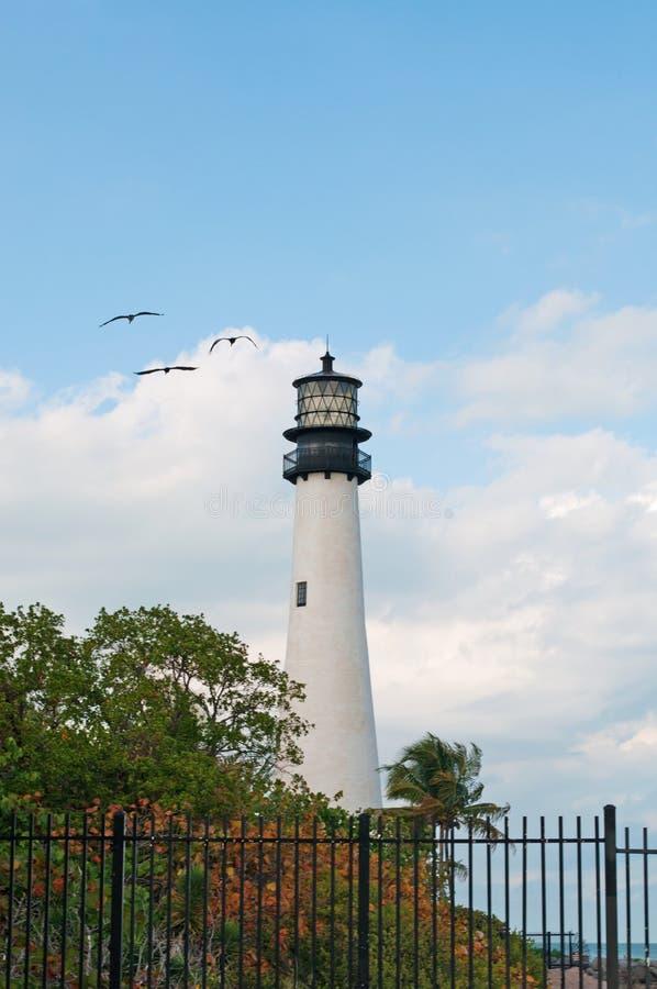 Den uddeFlorida fyren, stranden, vegetation, Bill Baggs Cape Florida State parkerar, skyddat område, fåglar, seagulls, Key Biscay arkivbilder