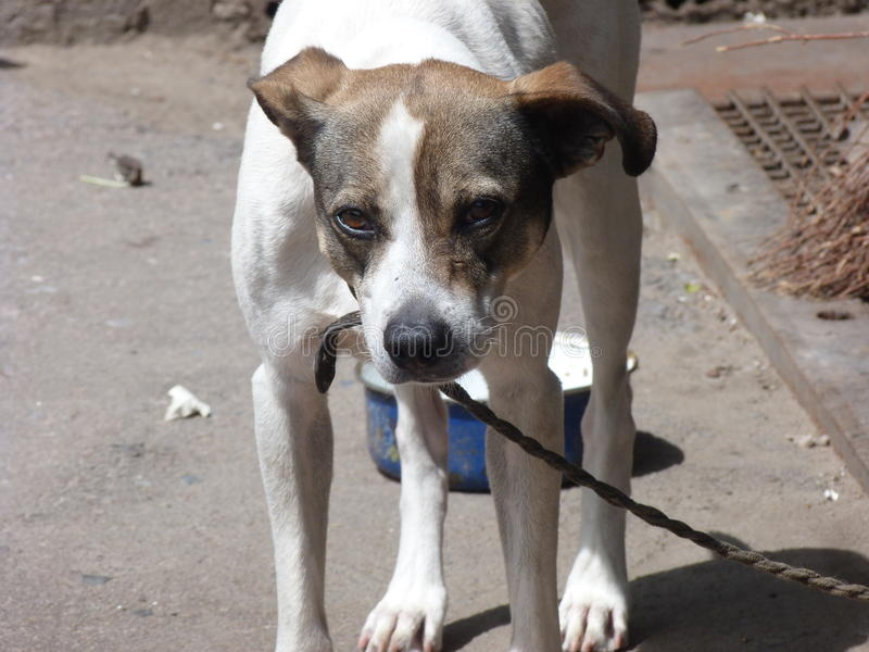Den Ukraina Donetsk regionen, Druzhkovka, den ledsna hunden synar arkivbilder