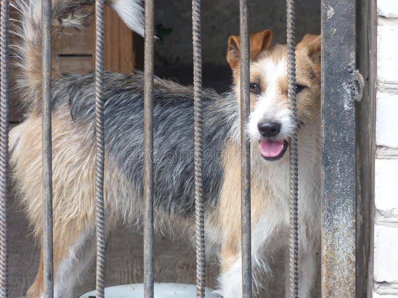 Den Ukraina Donetsk regionen, Druzhkovka, den ledsna hunden synar royaltyfri bild