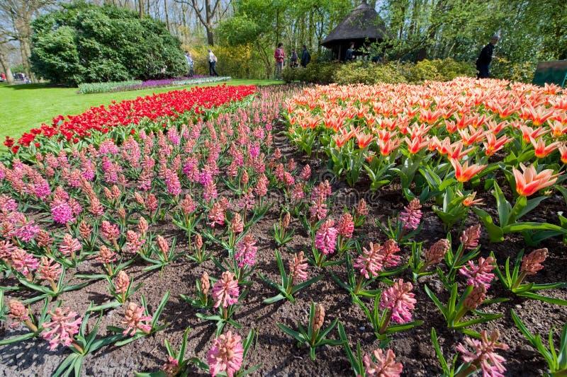 den underlag färgade blomman arbeta i trädgården mång- keukenhof arkivfoto