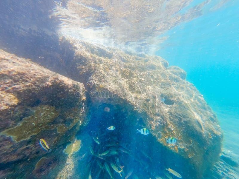 Den undervattens- sikten av fisken och vaggar i Guadeloupe arkivbild