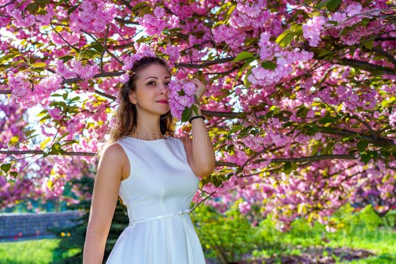 Den unga attraktiva kvinnan med rosa blommor i hennes hår i den vita klänningen poserar anbud i det blomningsakura trädet i parke royaltyfria bilder