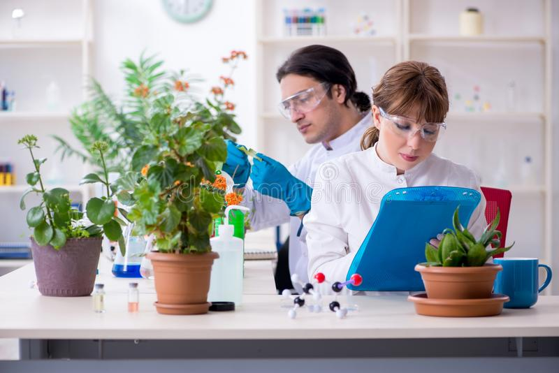 Den unga botaniker som tv? arbetar i labbet arkivbilder