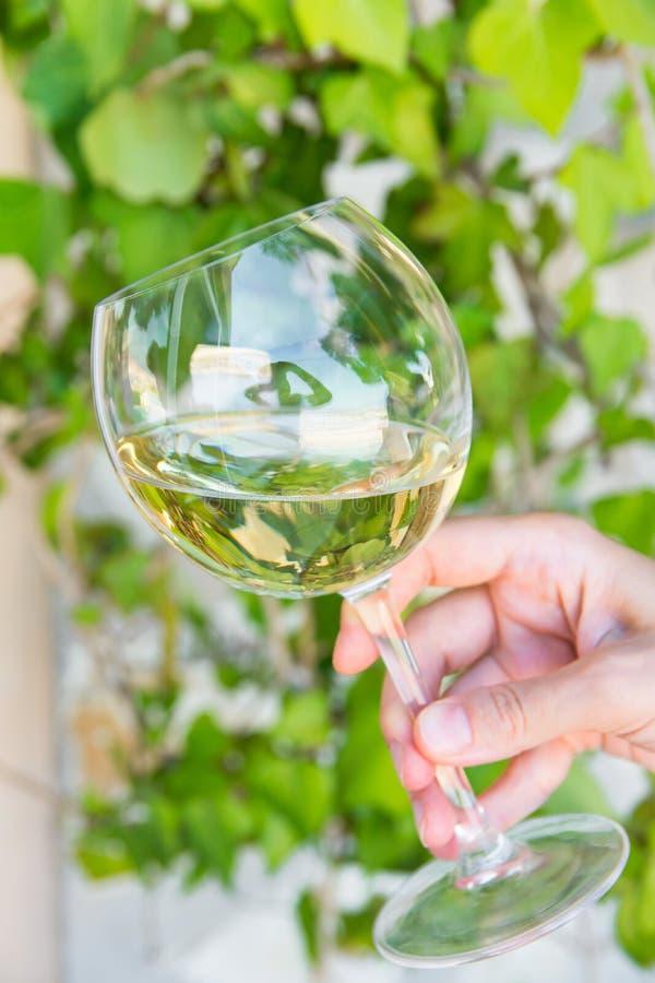 Den unga caucasian kvinnahållen i hand vippade på exponeringsglas av vitt torrt vin på grön lövverkvinrankabakgrund Autentisk liv arkivfoto