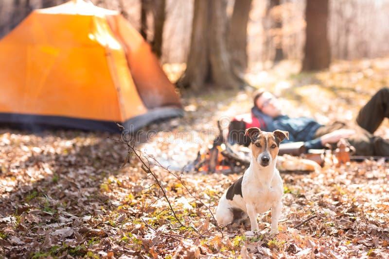 Den unga gulliga hunden vilar i tr?na n?ra brasan Man i bakgrunden royaltyfri fotografi
