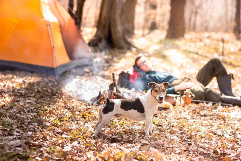 Den unga gulliga hunden vilar i tr?na n?ra brasan Man i bakgrunden royaltyfri bild