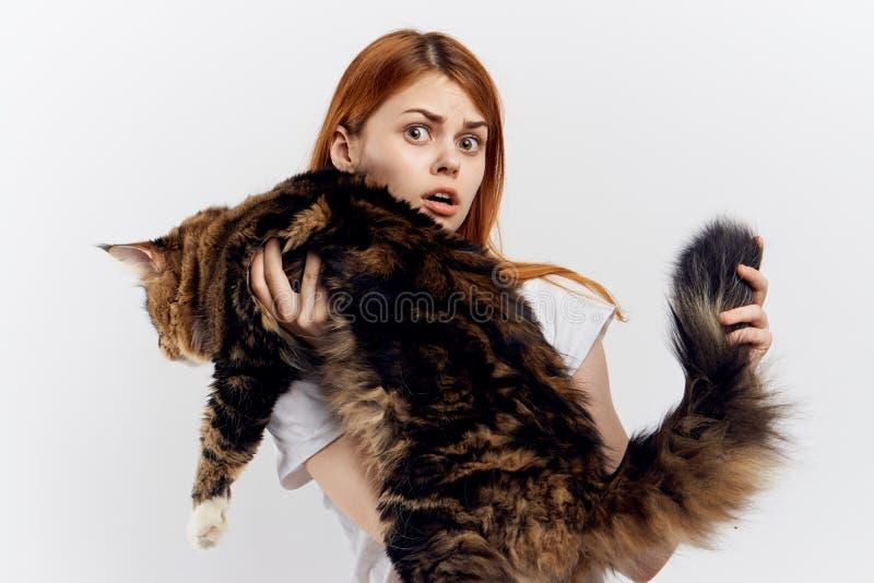 Den unga härliga kvinnan på vit bakgrund rymmer en katt, den maine tvättbjörnen, husdjur arkivfoton