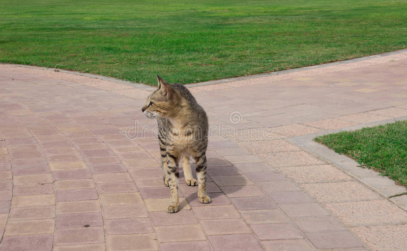 Den unga katten går i gården royaltyfri foto