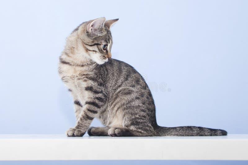 Den unga katten vänder omkring och ser tillbaka arkivfoton
