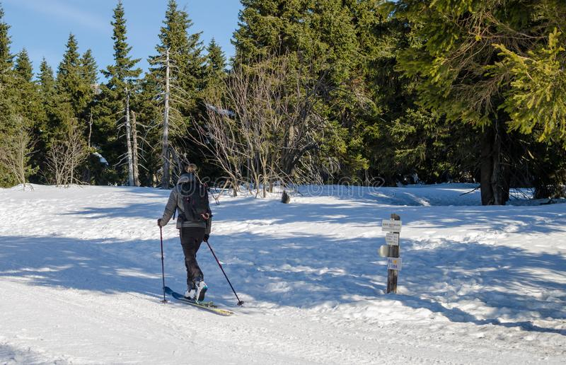 Den unga kvinnan flyttar längdlöpning i Tjeckien på den soliga vinterdagen Sikt från baksida royaltyfri foto