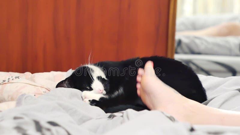 Den unga kvinnan hemma som sitter på soffan, arbetar kelar hon med en bärbar dator och hennes härliga katt som sover bredvid royaltyfria foton