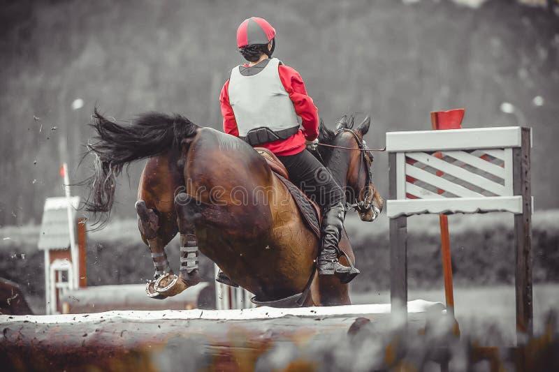 Den unga kvinnan hoppar en häst under övning på den eventing kursen för det arga landet, duotonekonst royaltyfri fotografi