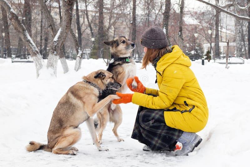 Den unga kvinnan med hennes två hundkapplöpning i en snöig vinter parkerar Hundkapplöpningen ger sig tafsar till ägaren royaltyfri bild