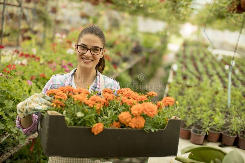 Den unga kvinnan som rymmer en ask full av våren, blommar i greenhouen arkivbild