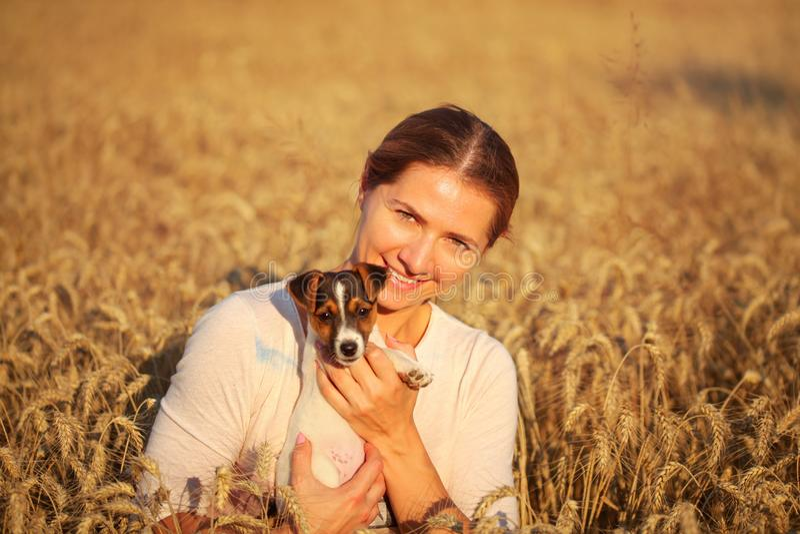 Den unga kvinnan som rymmer den Jack Russell terriervalpen på hennes hand, eftermiddagsol, tände vetefältet bakom fotografering för bildbyråer