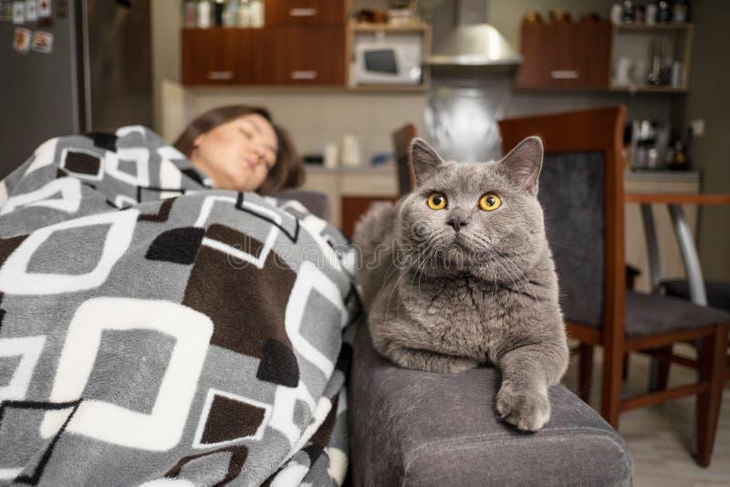 Den unga kvinnan som sover med hennes katt, katt v?ntar, n?r flickavaken upp, katten skulle sitta n?ra att sova flickan arkivfoton