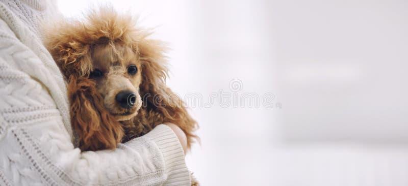 Den unga kvinnan vilar med en hemmastadd hund arkivfoton