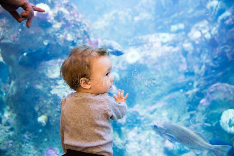 Den unga litet barnpojken undersöker akvariet royaltyfri foto