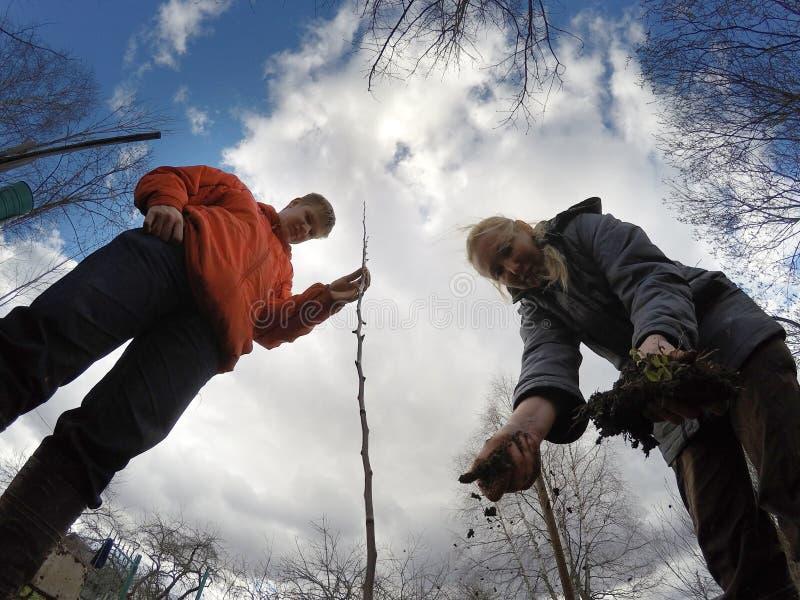 Den unga mannen och kvinnan planterar ett fruktträdungt träd royaltyfria foton