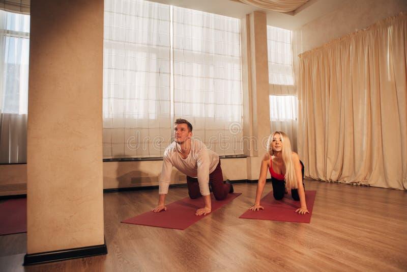 Den unga mannen och kvinnan som gör yoga, övar katten arkivbilder