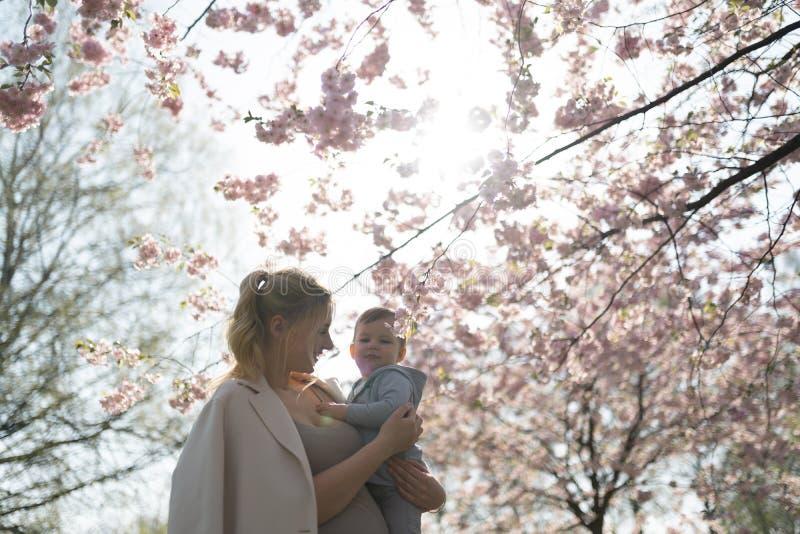 Den unga modermamman som rymmer hennes litet, behandla som ett barn sonpojkebarnet under att blomstra SAKURA Cherry tr?d med fall royaltyfri bild
