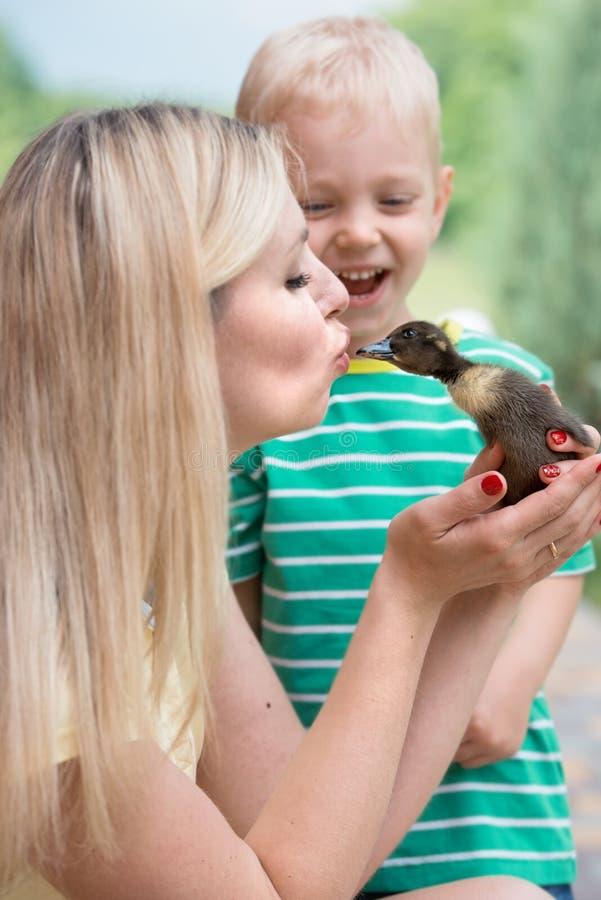Den unga modern kysser den lilla anden, små sonskratt royaltyfria bilder