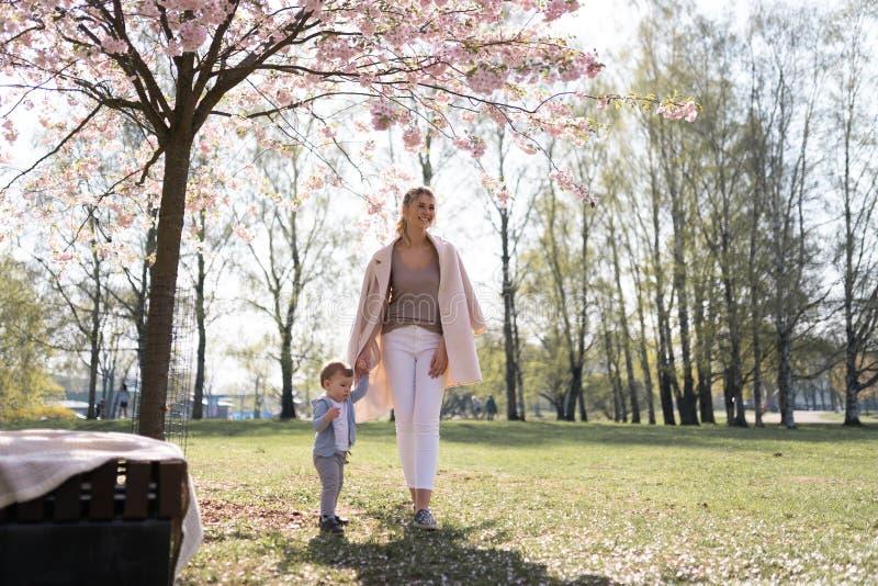 Den unga modern som g?r med henne, behandla som ett barn pojkebarnet som sonen i parkerar under Sakura tr?d arkivfoto