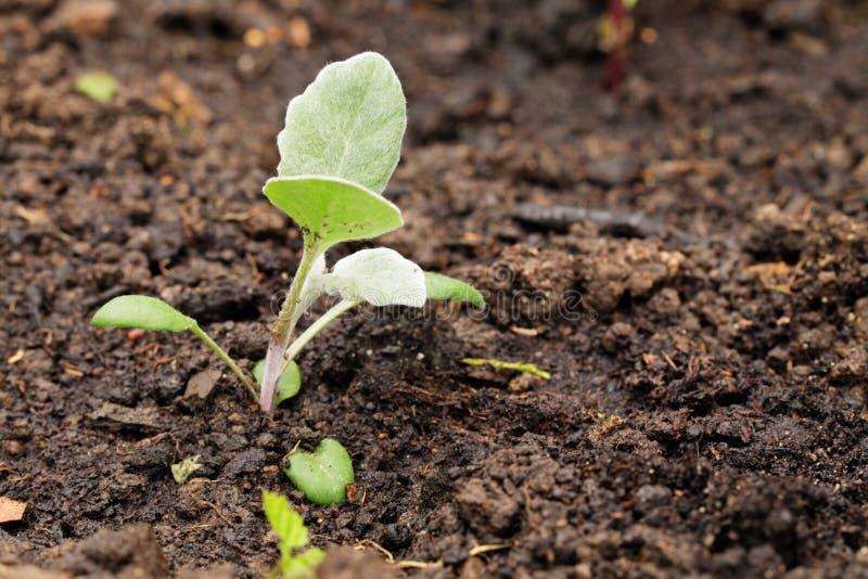 Den unga växten som planteras till jorden royaltyfri foto