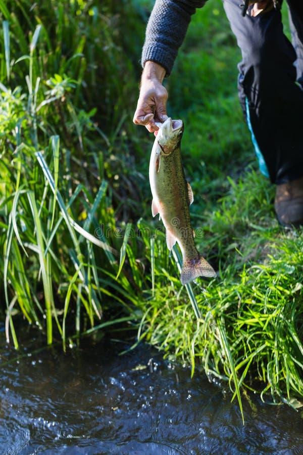 Den unga vuxna fiskaren fångade en stor forell och håll det i hand royaltyfria bilder