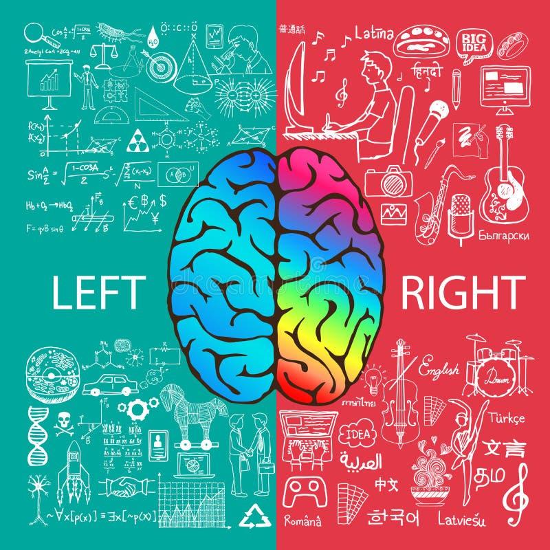 Den vänstra och högra hjärnan fungerar med klotter royaltyfri illustrationer