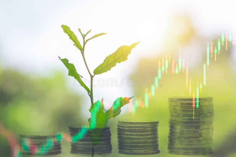 Den växande banken för pengarbesparingmyntet med den gröna växten spirar arkivbilder