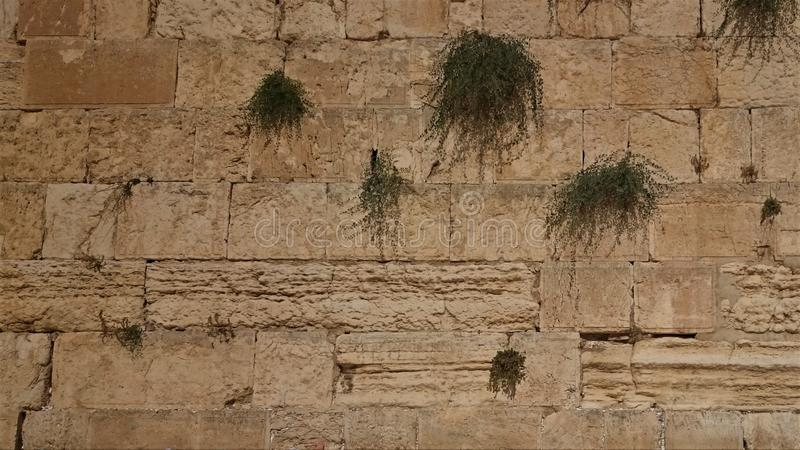 Den v?stra v?ggen eller den att j?mra sig v?ggen ?r det mest holiest st?llet till judendom i den gamla staden av Jerusalem, Israe arkivbilder