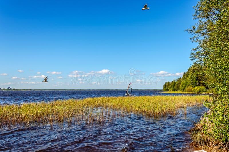 Den vackra bilden av den naturliga sjön en sommardag, med vindsurfer och sjögräs royaltyfria bilder