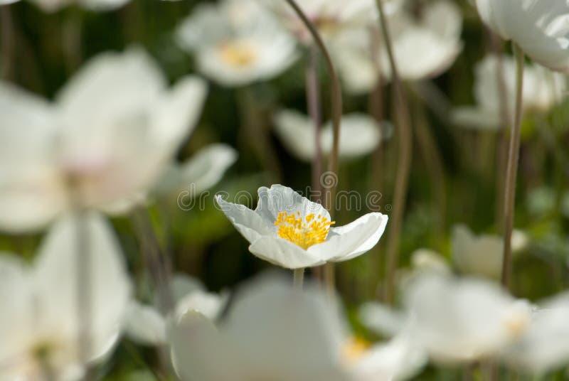 Den valda blomman arkivbild