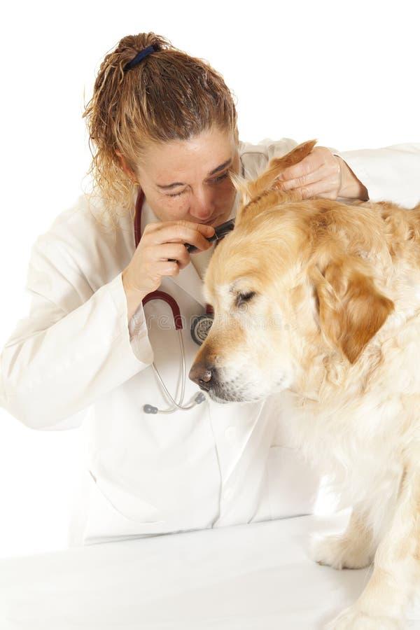 Veterinär- konsultation royaltyfri fotografi