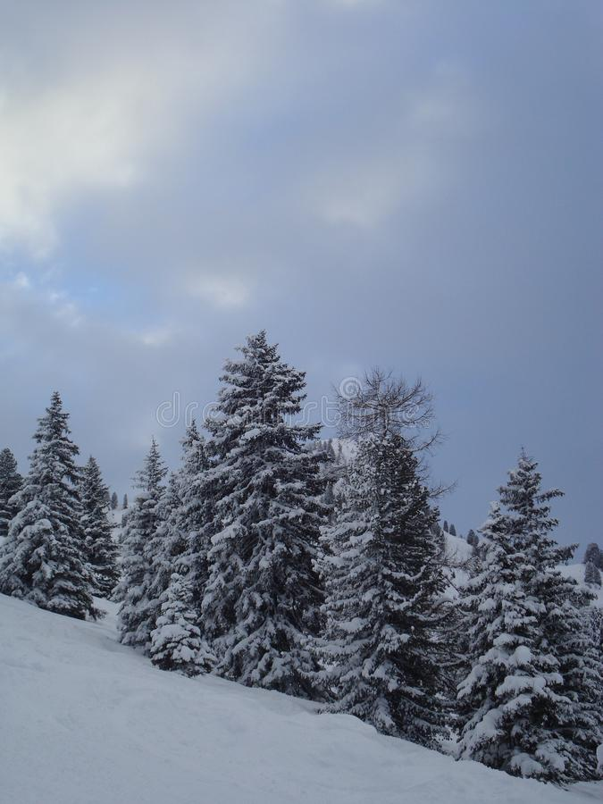 Den vintriga bergplatsen med täckt snö sörjer träd royaltyfri fotografi
