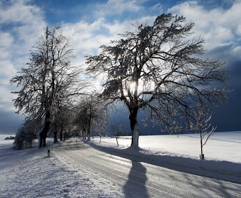 Den vintriga sikten med snö täckte vägen som fodrades av träd arkivfoto