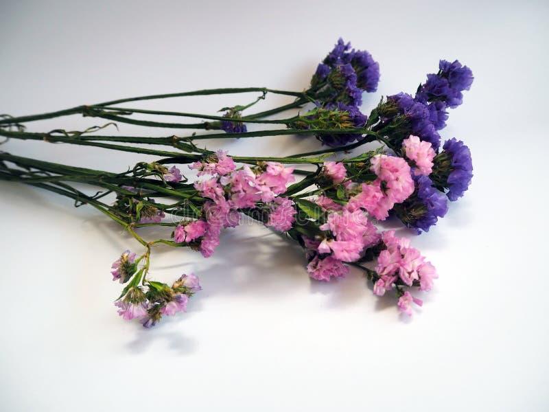 Den violetta och rosa staticen blommar bekant också som limonium eller havsla arkivfoto