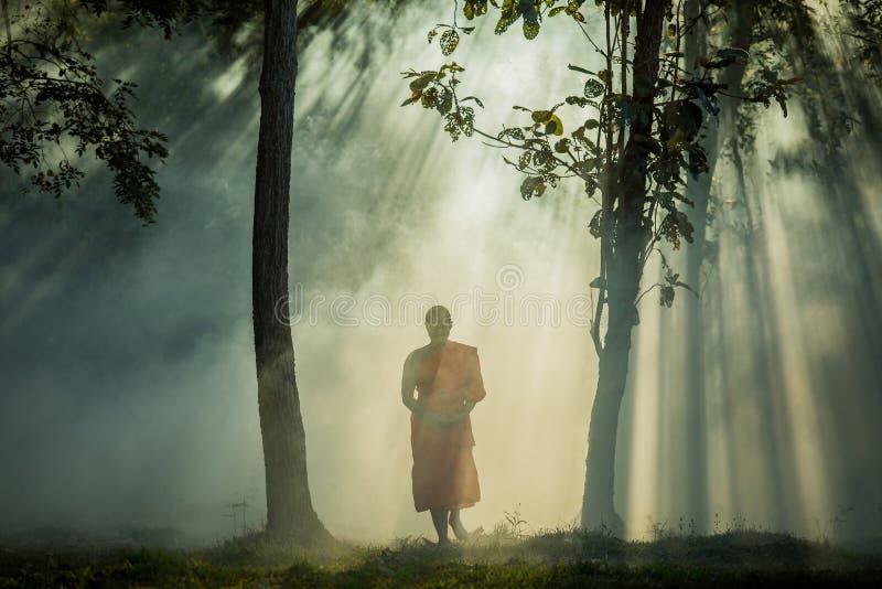 Den Vipassana meditationmunken går i en tyst skog royaltyfri fotografi
