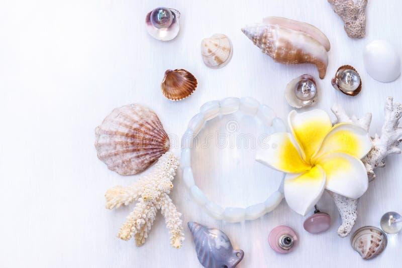 Den vita bakgrunden på det marin- temat med snäckskal, pärlor, koraller, örhängen, armbandet och en gul blomma royaltyfria bilder