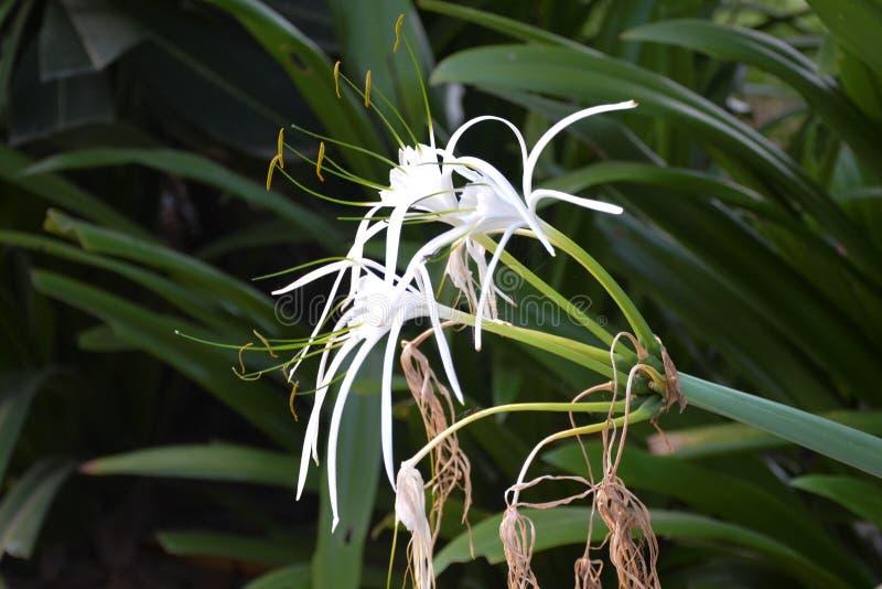 Den vita blomman betonade royaltyfri bild