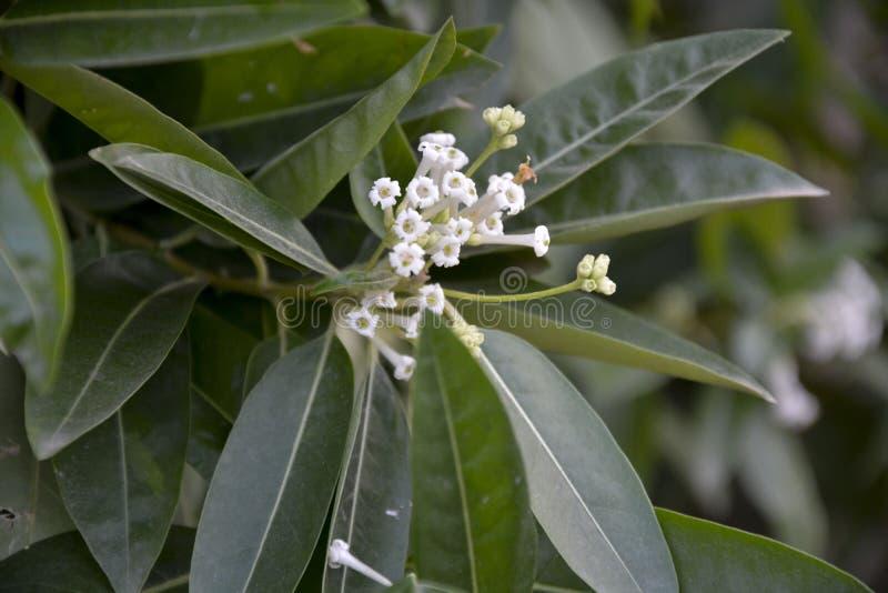Den vita blomman betonade 2 fotografering för bildbyråer