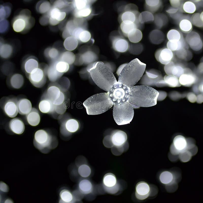 Den vita blomman tänder Bokeh arkivbilder