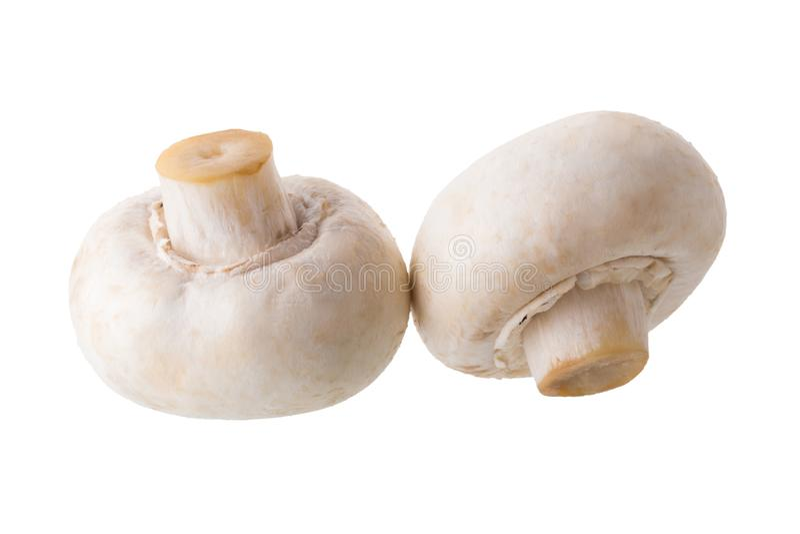Den vita champignonen plocka svamp, champignonen som isoleras på vita Backgro royaltyfria bilder
