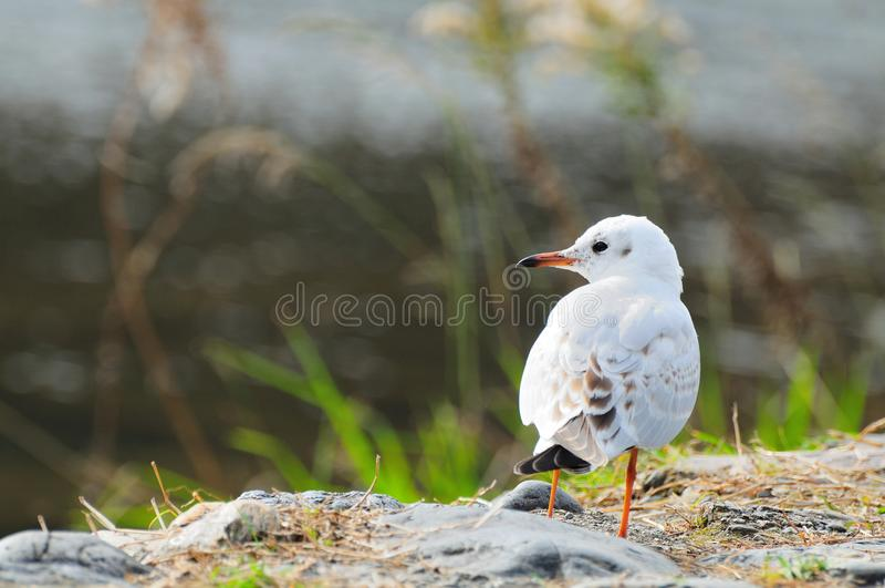 Den vita fågeln i hösten arkivbilder