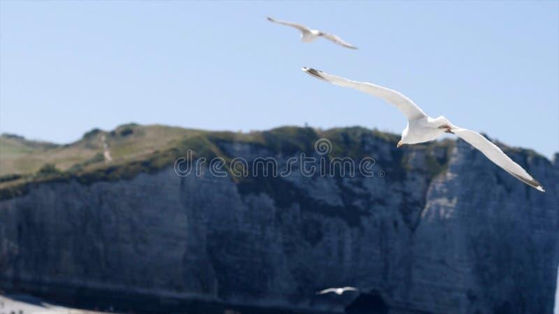 Den vita fiskmåsen flyger på bakgrund av det blåa havet med stenig kusthandling Flyg av den vita seagullen i klar himmel på bakgr royaltyfri fotografi