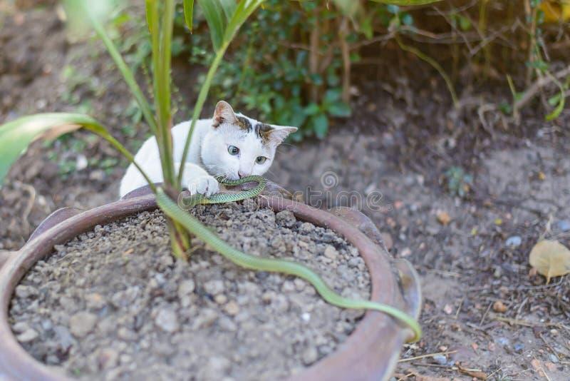 Den vita gröna ormen för kattkampen i slarvigt smutsar ner trädgården, fara royaltyfria bilder